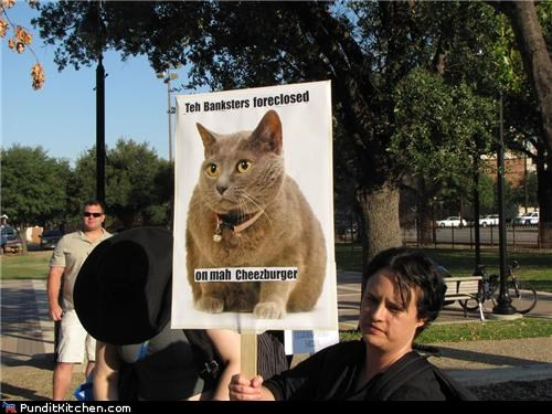 cheezburger,lolcats,Occupy Wall Street,political pictures,protesters