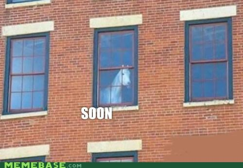 animemes,horse,Office,paperwork,SOON,window