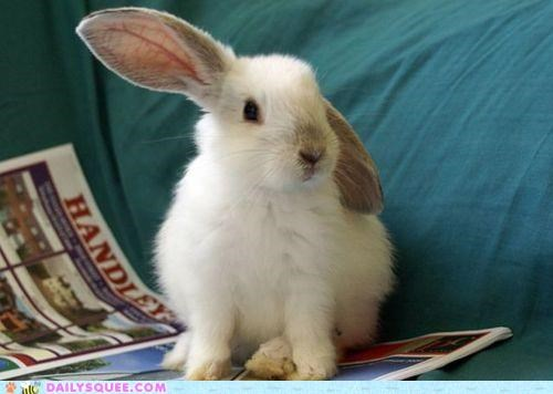 bell,bunny,dinner,dinner time,ear,happy bunday,hearing,listening,onward,rabbit,sound
