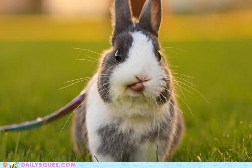 anticipating bunny do want Hall of Fame happy bunday licking lips nomming noms rabbit tasting - 5286802176