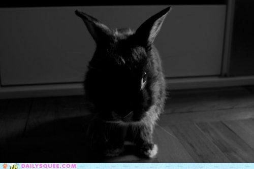 black and white bunny color contrast happy bunday rabbit squee - 5286816512