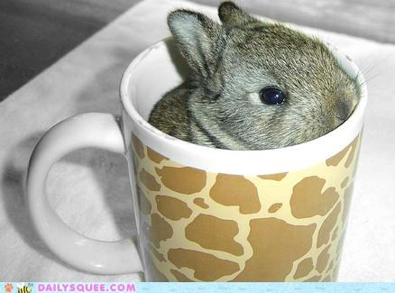 acting like animals art brewing bunny Hall of Fame happy bunday pun steeped steeping tea tradition - 5286838016