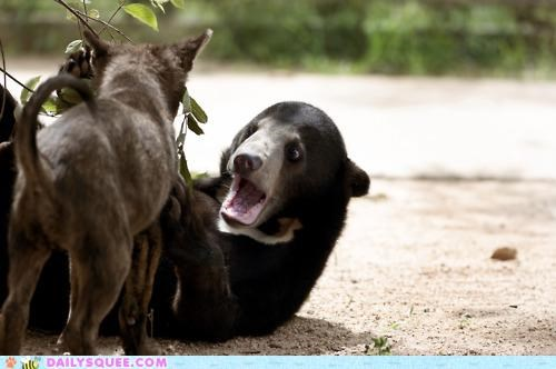 acting like animals,afraid,bear,dogs,embarrassed,freaking out,overreacting,realization,scared,sun bear