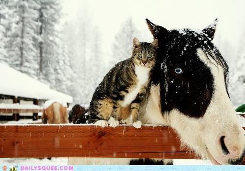 acting like animals cat cold comforting cuddling friends friendship guilt trip Hall of Fame horse Interspecies Love selfless snowing support touching winter
