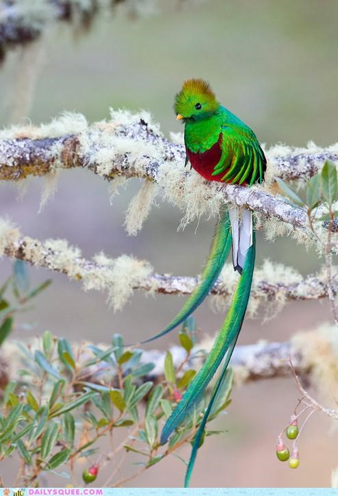 amazing beautiful bird breathtaking colorful Hall of Fame hypnotic plumage quetzal - 5286988032