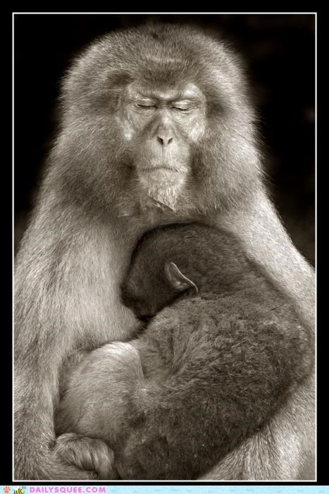 arms,baby,cuddling,family,Hall of Fame,happy,love,monkey,monkeys,mother,protection,safe,safety,shelter,sleeping,snuggling