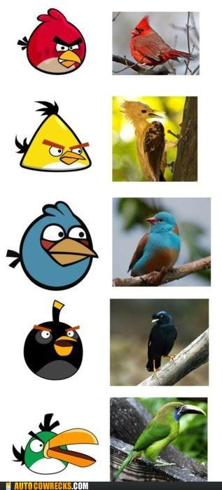 angry birds,angry birds IRL,animals,birds