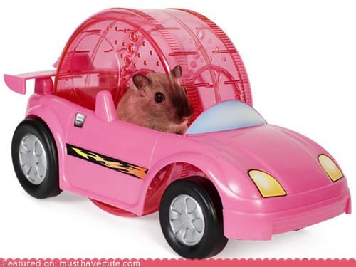 ball,car,cute,hamster,hamster ball,race,wheel,win