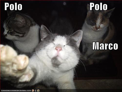 games,lolcats,Marco Polo,swimming