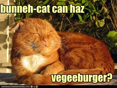Cheezburger Image 5288884480