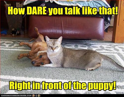 How DARE you talk like that! Right in front of the puppy!