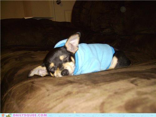 listening paranoid puppy reader squees sleeping suspicious - 5288939008