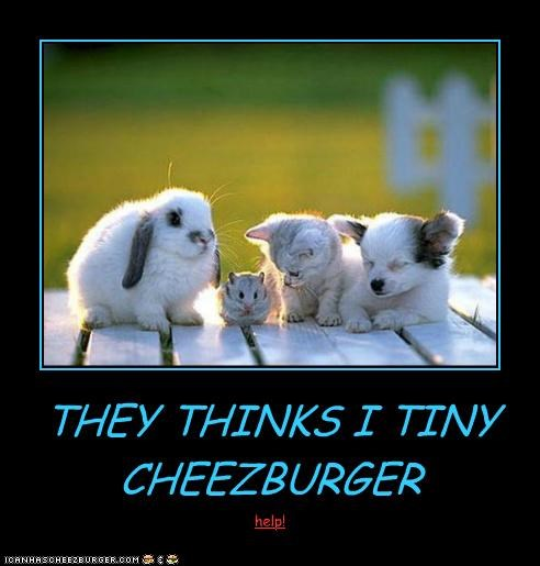 Cheezburger Image 5289142528