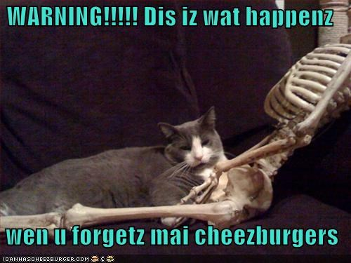 Cheezburger Image 5289229568