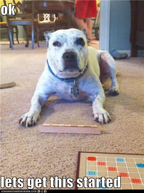 board game,game,pit bull,pitbull,play,playing,scrabble,spell,spelling