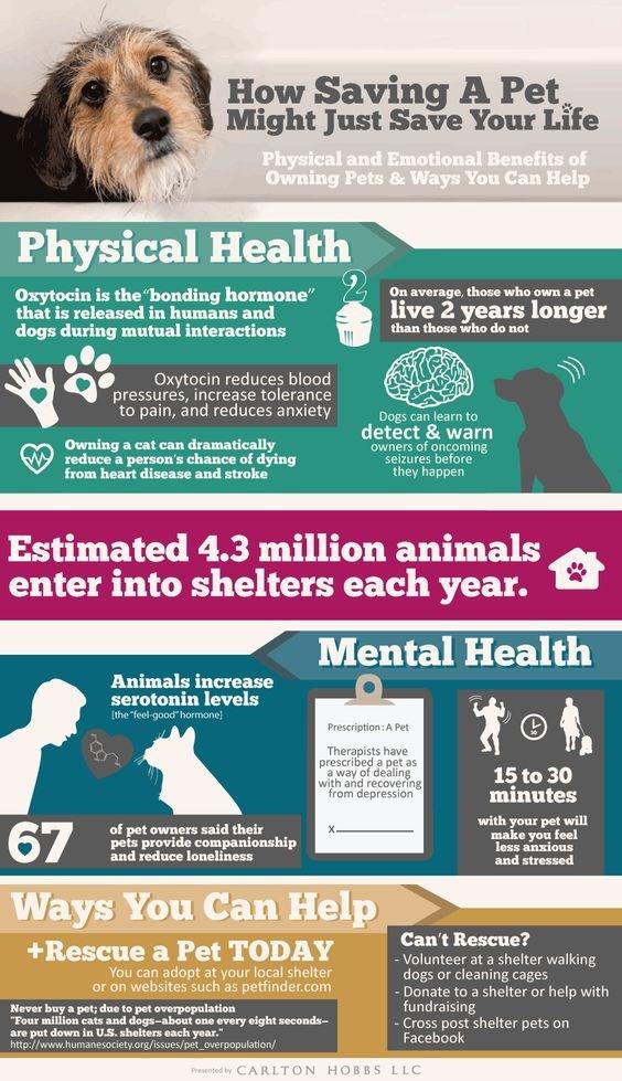 pets infographics benefits parents - 5290245