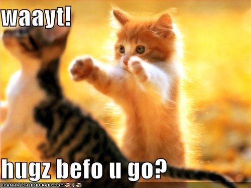 cute hugs kitten lolcats lolkittehs - 529030400