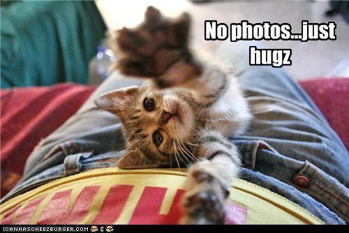 do want hug hugging hugs just kitten no Photo stretching - 5291064320