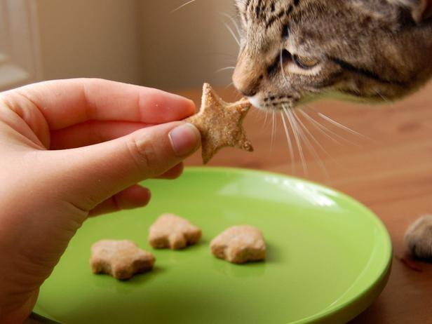 treats home made pets recipes Video - 5291525