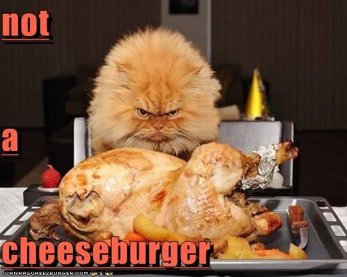 Cheezburger Image 5291759872