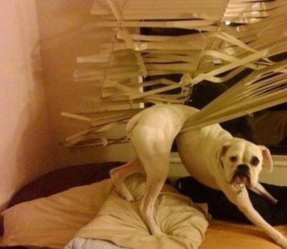 doggeh Sundog - 5291781120