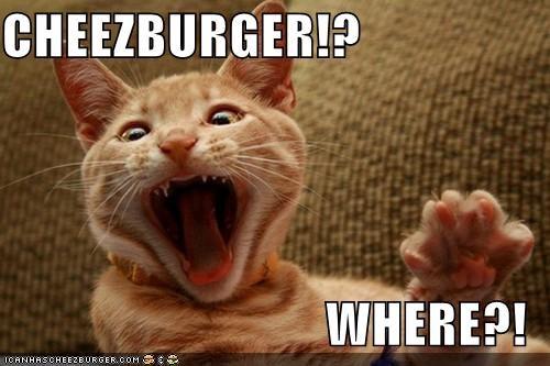 Cheezburger Image 5292380672