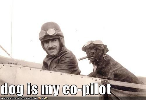 airplane awesome Badass dog is my co-pilot flight flying i has a hotdog - 5292558848