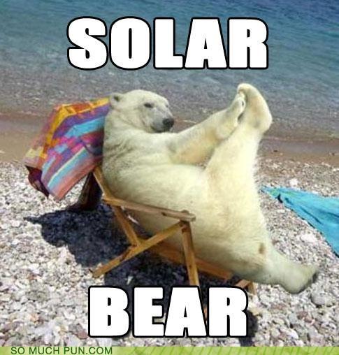 bear,literalism,lolwut,polar,polar bear,rhyme,rhyming,similar sounding,solar,sunning,tanning