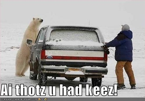 bears,car,keys,lolar bears,polar bears,snow