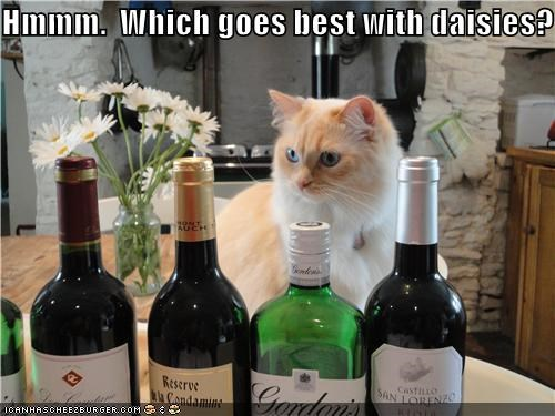 alcohol,best,daisies,decision,goes,tabby,with