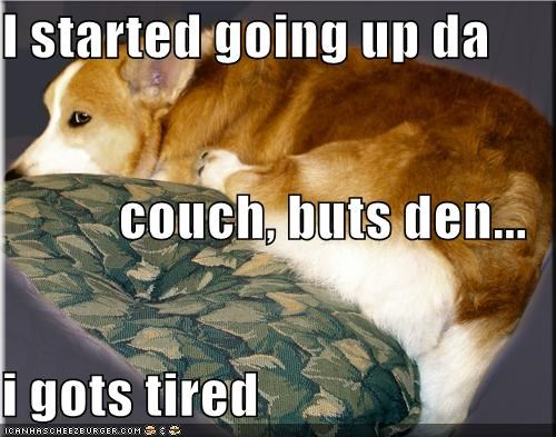 climb,climbing,corgi,couch,got tired,lazy,tired