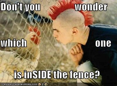 chickens fence lolbirds mohawk punk red roosters