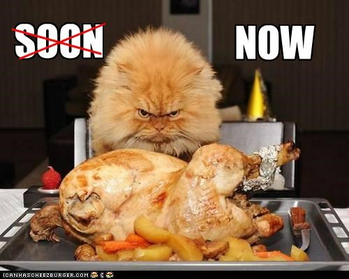 caption captioned cat never mind now persian SOON - 5293761280