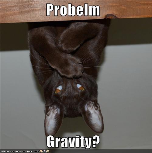 cat defying gravity Gravity haha I Can Has Cheezburger physics problem problem-nature science - 5294193152