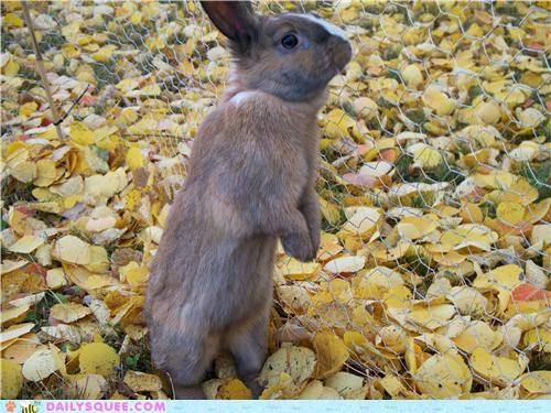 baby bunny exploring happy bunday outdoors outside rabbit reader squees