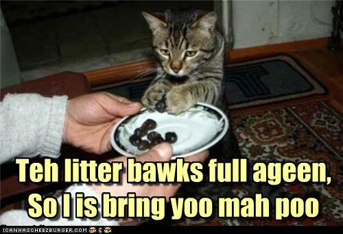 Teh litter bawks full ageen, So I is bring yoo mah poo Teh litter bawks full ageen, So I is bring yoo mah poo