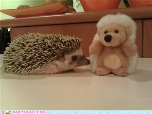 forever friends friendship Hall of Fame hedgehog lolwut reader squees stuffed animal - 5294813952