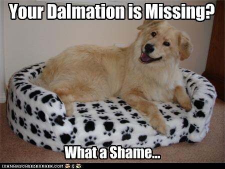 Your Dalmation is Missing? What a Shame...