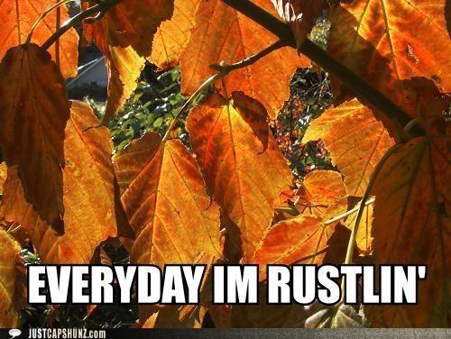 autumn everyday im shufflin fall leaves lyrics rustle rustling trees - 5295851776