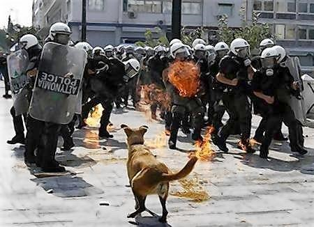 doggeh Look At This Dog Protesting Pooch Riot Dog - 5295875584