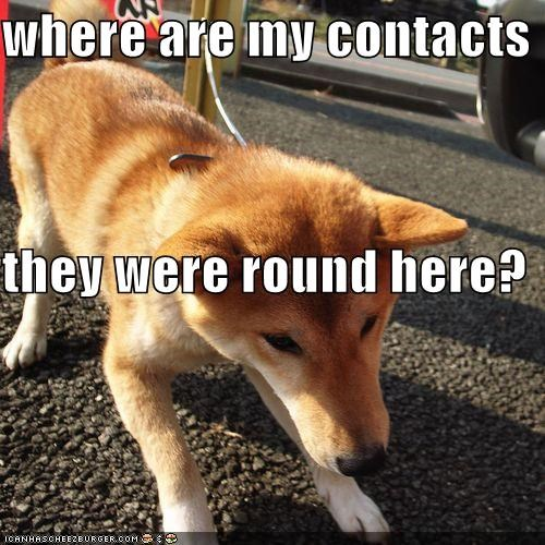 contact lenses,contacts,eyesight,looking,lost,lost another one,lost my contact,oops,shiba inu,vision