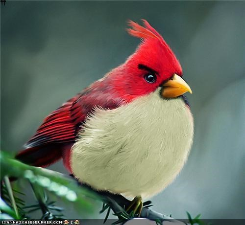 Angry Birds in the Wild