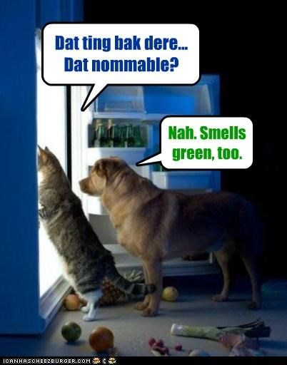 cat dogs food fridge friends friendship hungry munchies nommable noms people food raiding the fridge tag team whatbreed