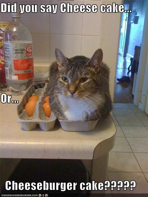Cheezburger Image 5296750592