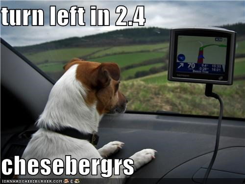 car directions drive driving gps jack russel terrier turn turn left