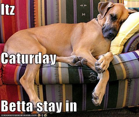 asleep Caturday couch great dane lazy saturday sleep sleeping weekend - 5296791552
