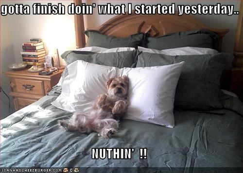 bed finish what you start nothing Pillow shih tzu whatbreed - 5296792832