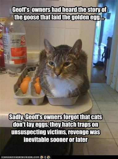Geoff's owners had heard the story of the goose that laid the golden egg.... Sadly, Geoff's owners forgot that cats don't lay eggs, they hatch traps on unsuspecting victims, revenge was inevitable sooner or later