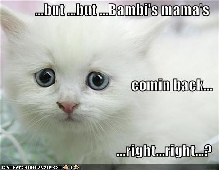bambi,blue,cartoons,disney,film,kitten,lolcats,lolkittehs,movies,white