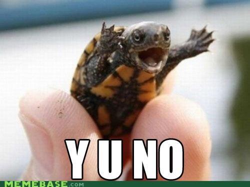 IRL ninja pizza turtle Y U No Guy - 5298124544